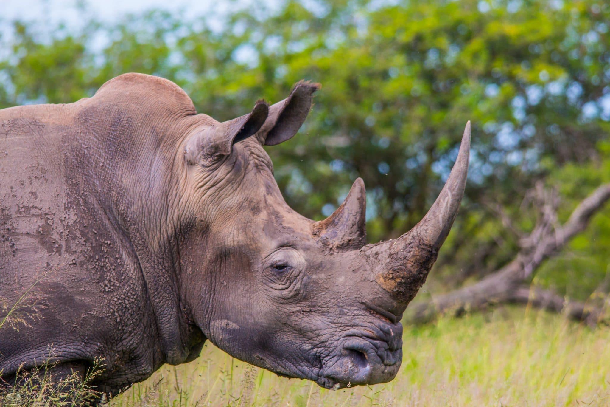 hluhluwe umfolozi wildlife