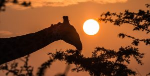 3 night big 5 safari south africa package