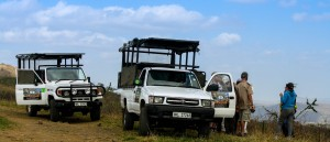3 hour hluhluwe safari