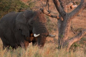 day safari options to hluhluwe game reserve