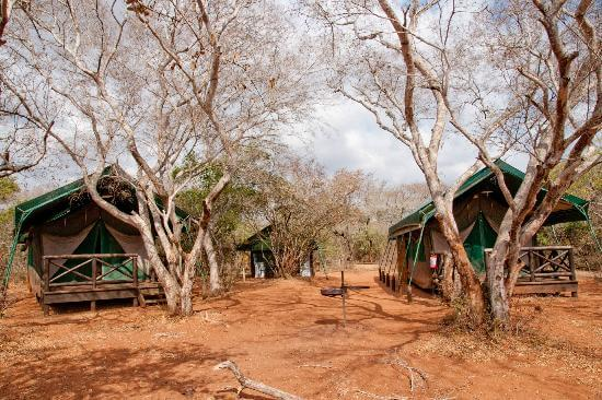 mkuze game reserve tented camp