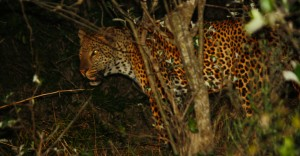 night drive isimangaliso with heritage tours & safaris