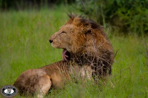 South Africa Safari Packages