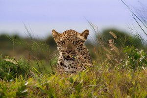 durban 3 day safari package