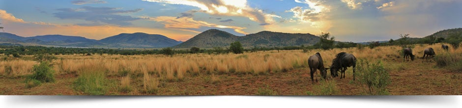 game reserves in south africa pilanesberg