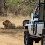 day safari tours durban