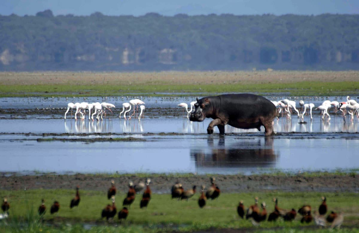 top game reserves in south africa isimangaliso wetland park