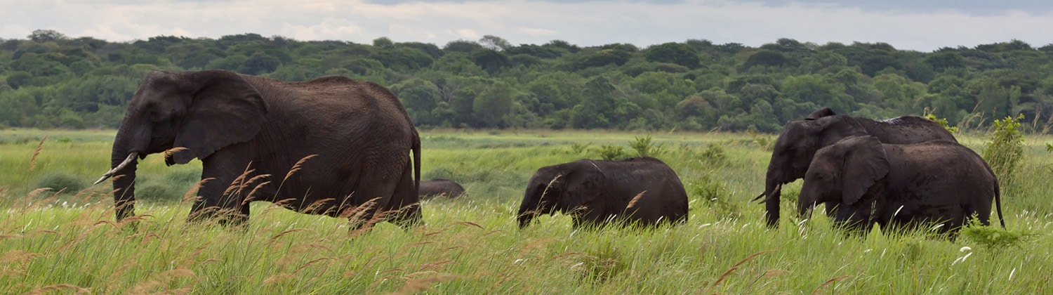 largest elephants tembe game reserves in south africa