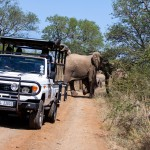 game reserves in south africa, hluhluwe game reserve