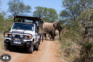 hluhluwe game reserve reviews