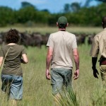 guided walking safari tours