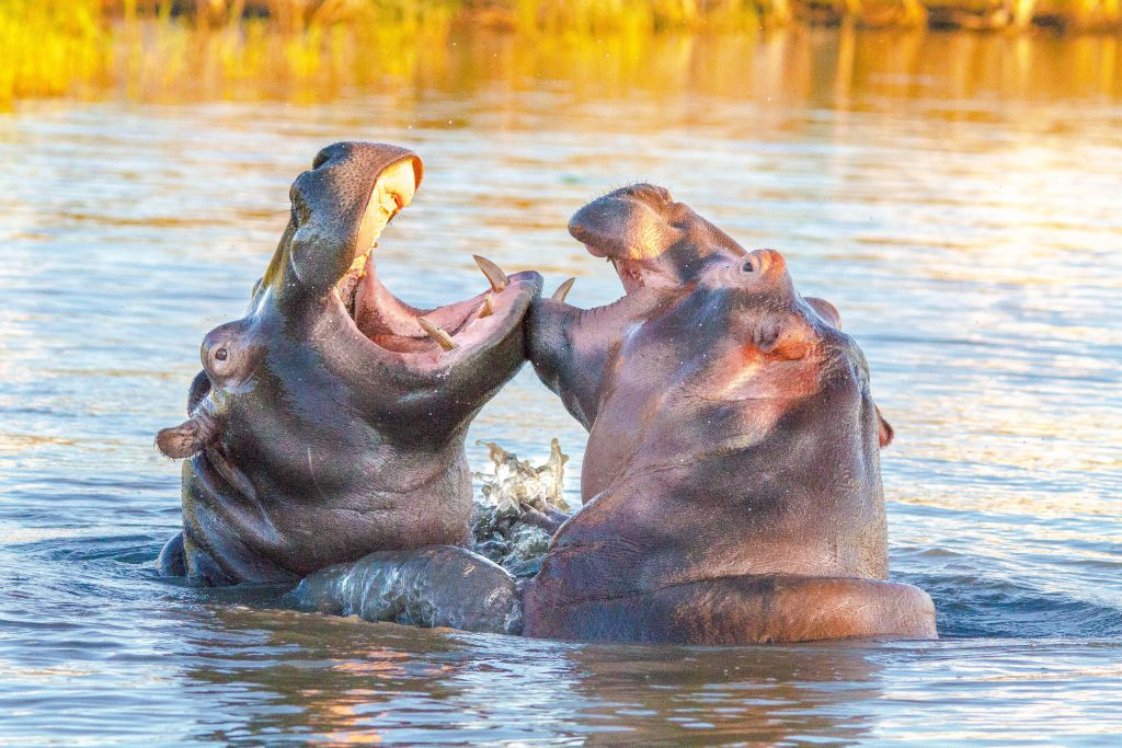big 5 safari and boat safari isimangaliso
