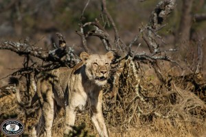 Hluhluwe Game Reserve Travel Guide