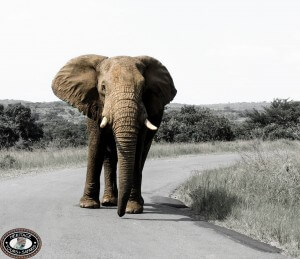 Elephant Road Block