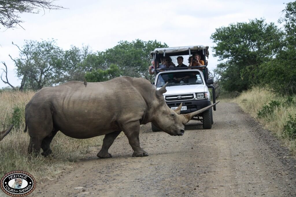 Rhino on Safari