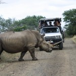 safari options within umfolozi park
