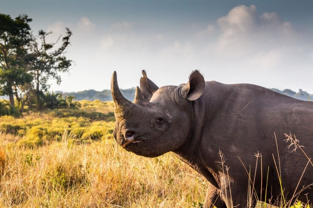african big 5 rhino facts