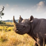 2 Day Safari Package to South Africa
