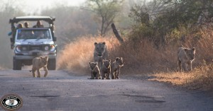 heritage tours and safaris in zululand