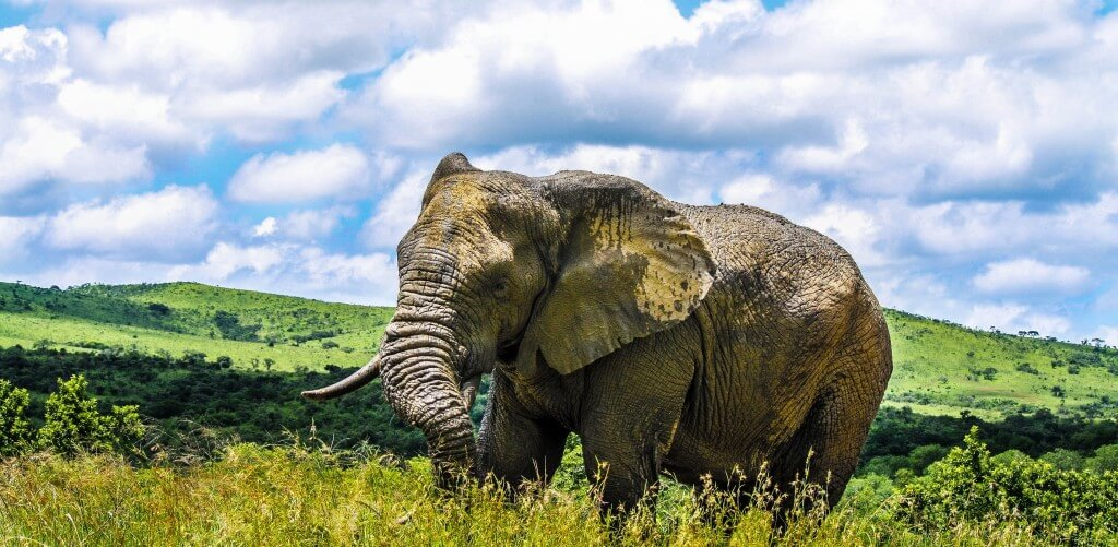 8 day cape town zululand safari package