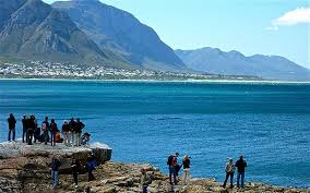 hermanus cape town whale watching