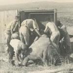 history: hluhluwe-imfolozi park