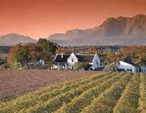 stellenbosch wine tours what to expect