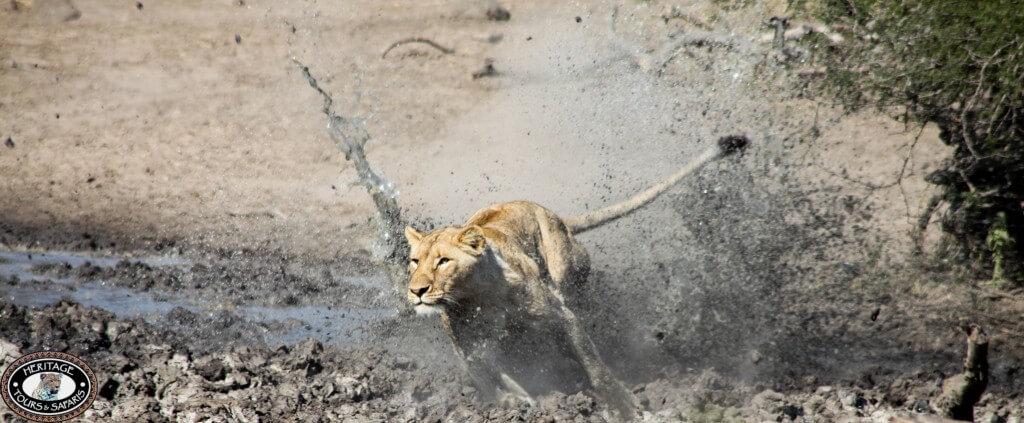durban hluhluwe umfolozi game reserve