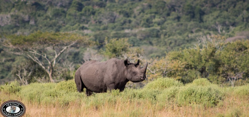 Poacher killed in KZN game reserve