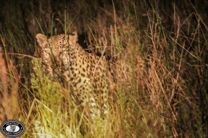leopard safari tours and excusrions