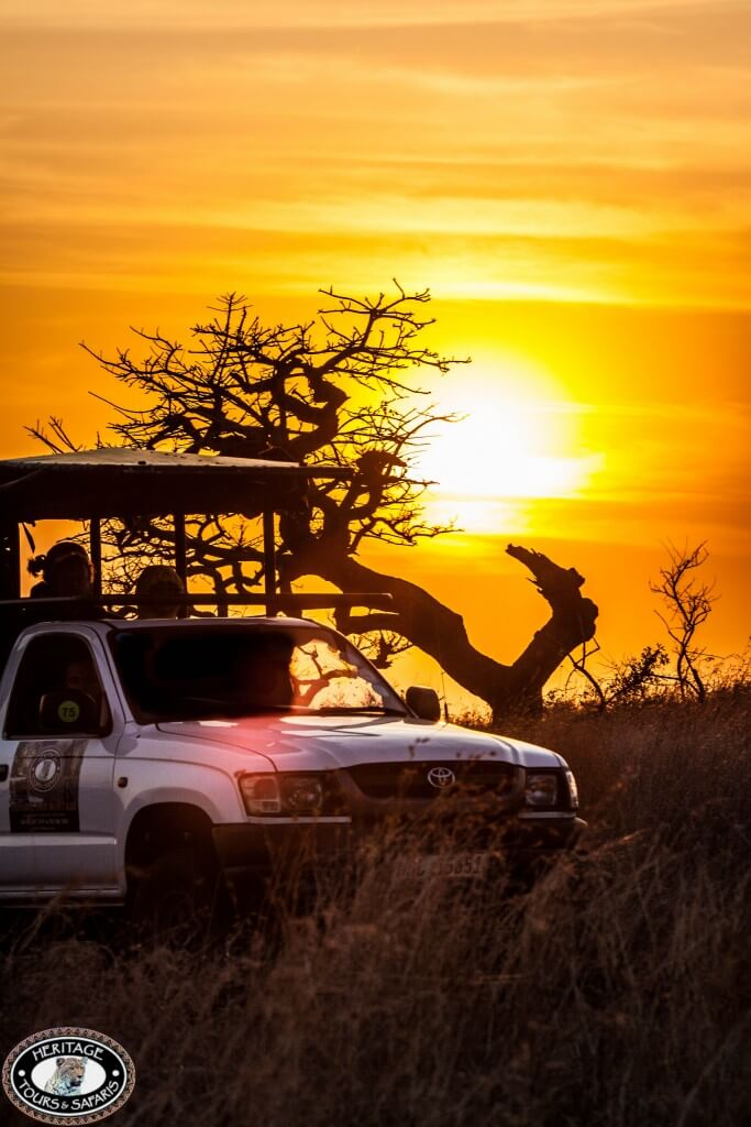 hluhluwe game reserve safari