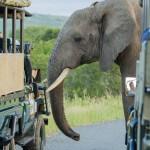 full day big 5 safari hluhluwe game reserve