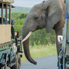 Durban Safari Packages