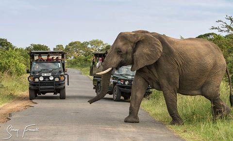 Durban Big 5 Safari to Hluhluwe - Hluhluwe Game Reserve