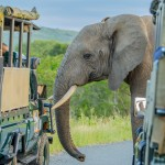 package tours and safaris kwazulu natal