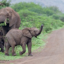 kwazulu natal big 5 safaris