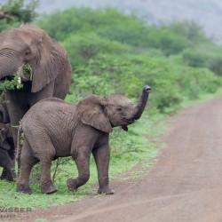 kwazulu natal big 5 safaris