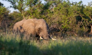 durban overnight safari