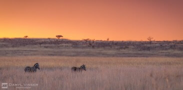 2 Night Hlunluwe-Park Safari Package