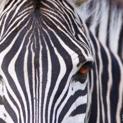 4 night south africa safari package hluhluwe imfolozi park