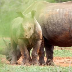 hluhluwe imfolozi game reserve day safaris