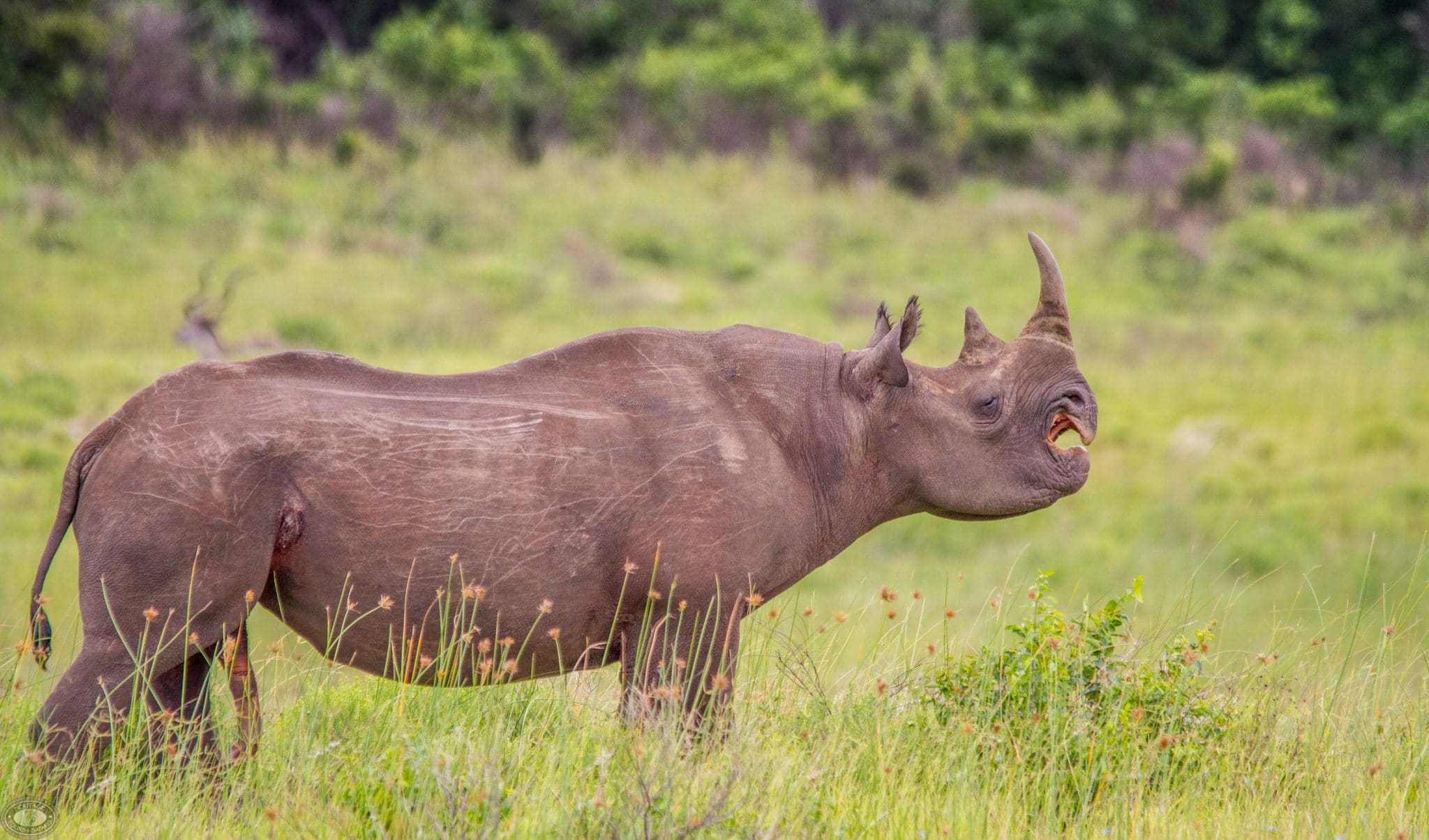 Game Reserves in KwaZulu Natal South Africa
