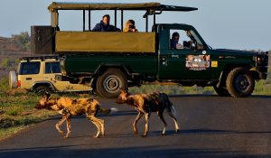 hluhluwe-imfolozi half day safaris tours