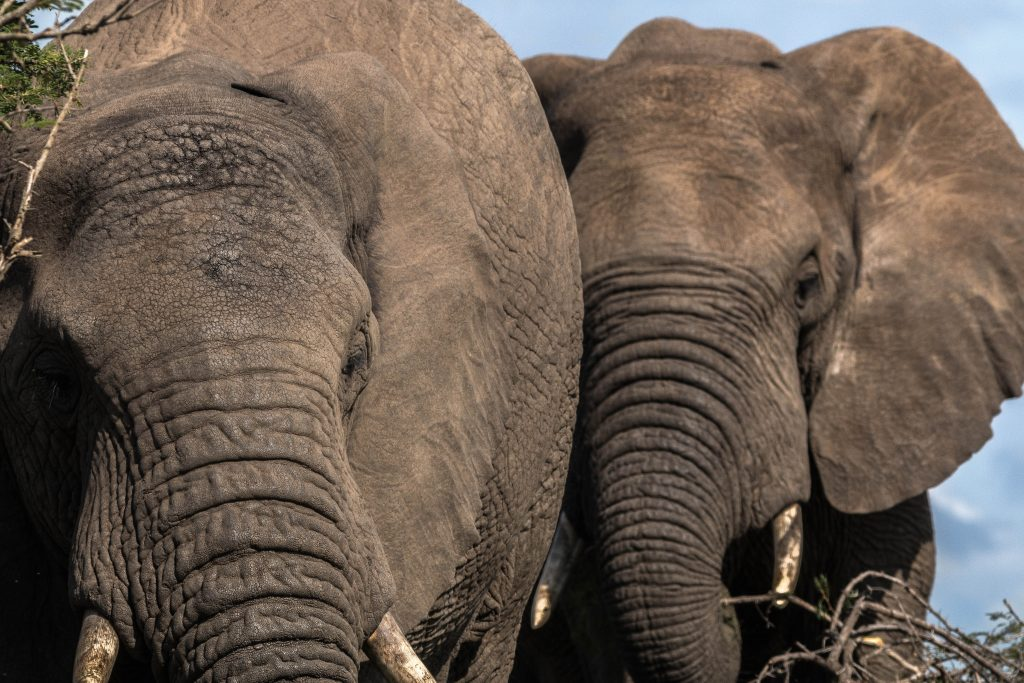 hluhluwe-Imfolozi what to do safari options