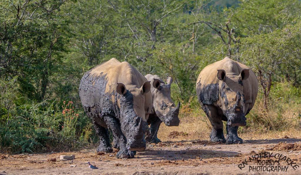 safari package south africa reviews