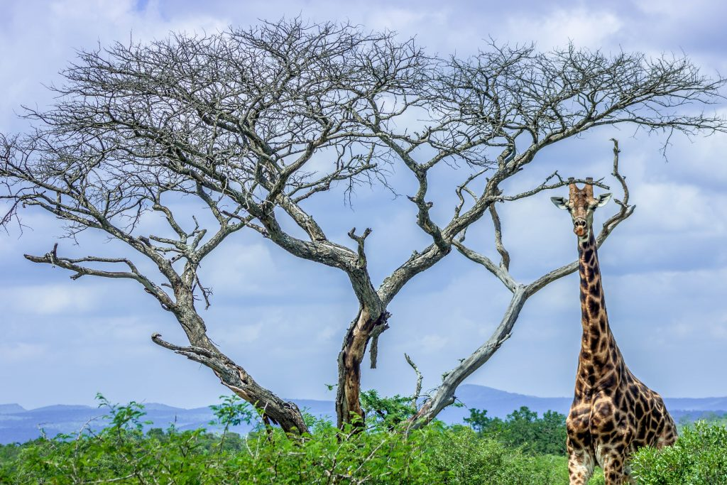 south african biomes facts and information