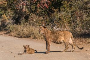 safari packages south africa reviews