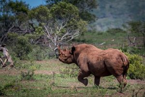 zululand game reserve mkuze game reserve