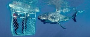 cape town day tours options shark cage diving