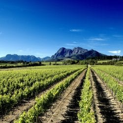 cape town wine tasting tours & safaris